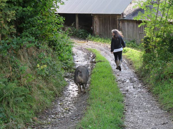 Debbie Kingsley walking down farm track with Berkshire pig following