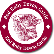 Red Ruby Devon Cattle logo